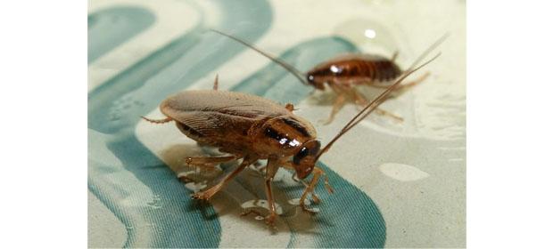 Acme Pest Control