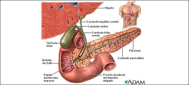 Centro Quirurgico de Enfermedades Digestivas