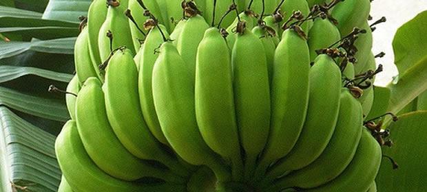 Fermica en guatemala tel fono y direcci n p ginas amarillas for Ver sucursales telefonos