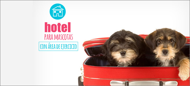 Hospital Veterinario Dog Care