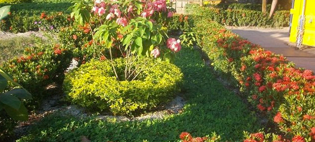 Plantas ornamentales en cartagena p ginas amarillas for Diseno de plantas ornamentales
