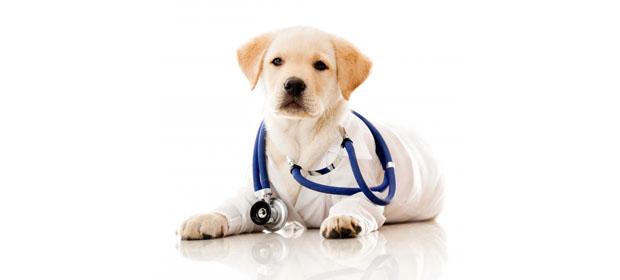 Clínica Veterinaria Belén
