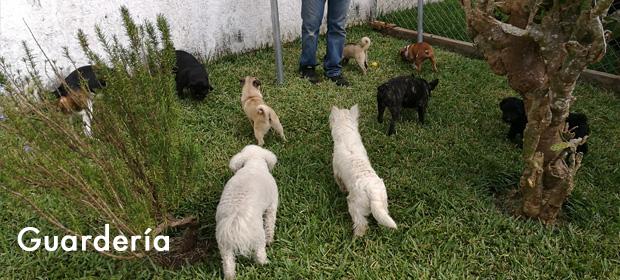 Hotel y Escuela Canina Alfa Can
