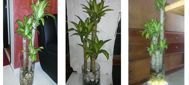 Cascadas Y Jardineria Planton Viveros
