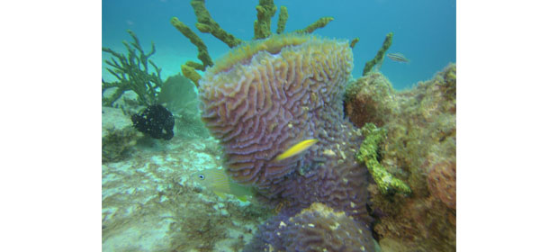 Felipe Diving - Imagen 1 - Visitanos!