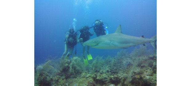 Felipe Diving - Imagen 4 - Visitanos!