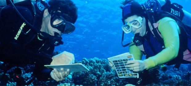 Aquatica Surtidor Nautico