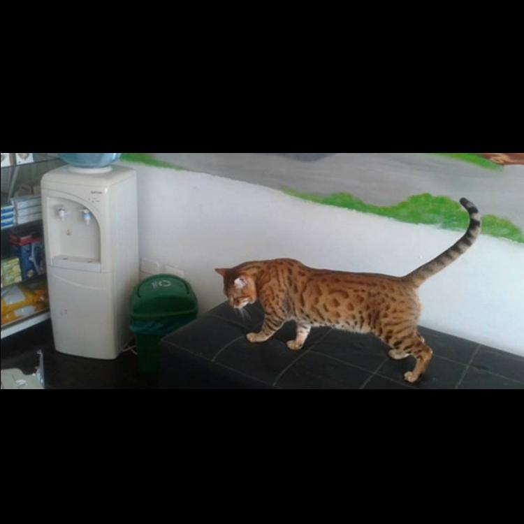 Pelos Y Gatos