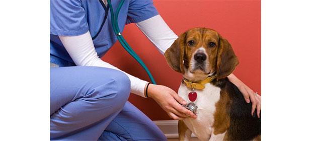 Caninos Y Felinos Poblado S.A.S - Imagen 5 - Visitanos!
