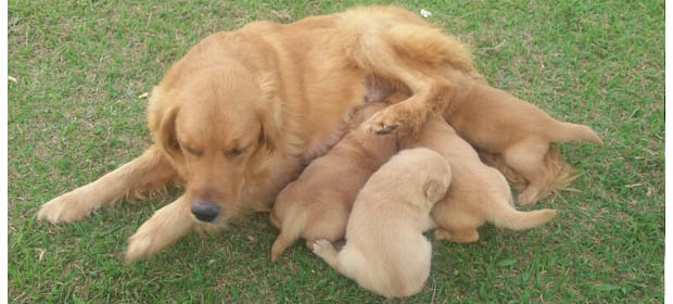 Criadero Family Dog
