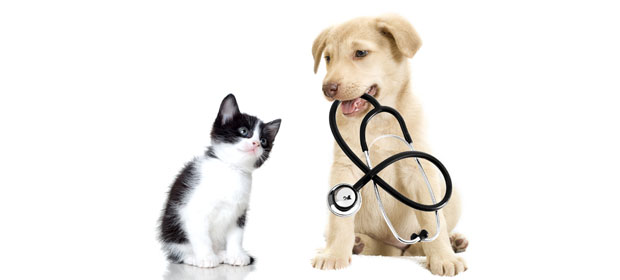 Centro Veterinario Animal Sweet
