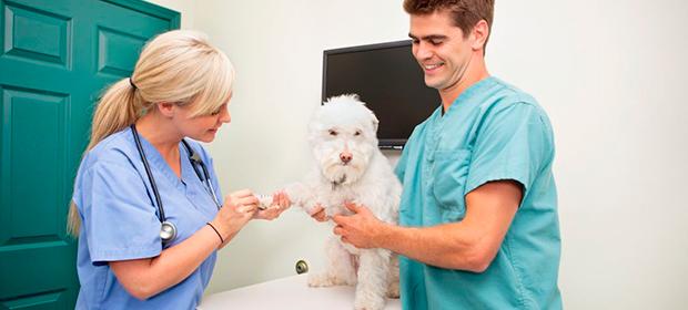 Doctor Pet