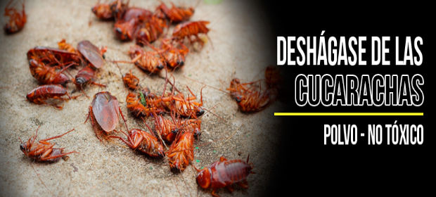 Fumigaciones Chao Cucarachas