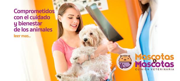 Clinica Veterinaria Mascotas Y Mascotas