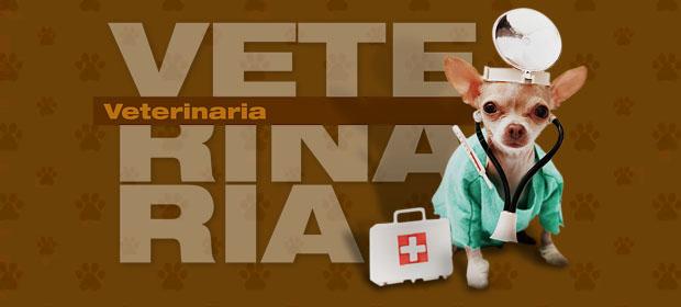 Almacén Veterinaria Las Hormigas - Imagen 1 - Visitanos!