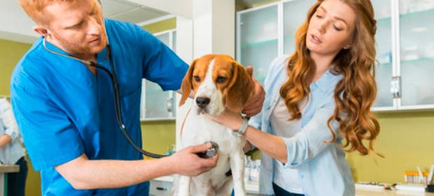 Caninos Y Felinos Centro Veterinario