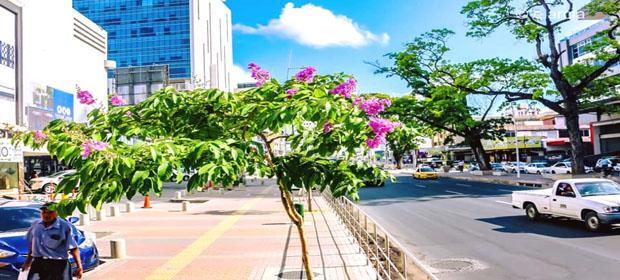 Municipio De Panamá - Imagen 5 - Visitanos!
