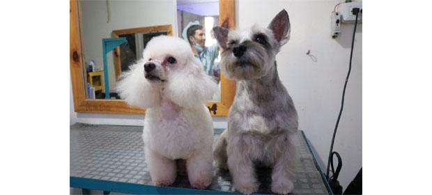 Peluqueria Canina Punto Guau