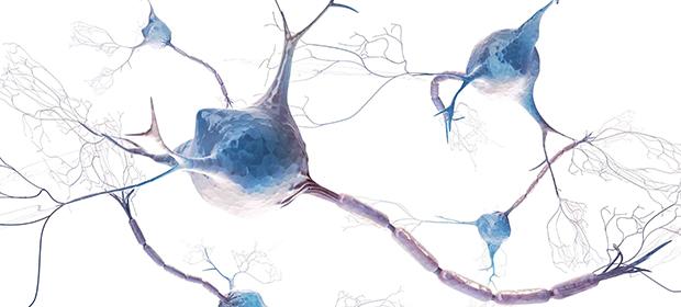 Asociación Antioqueña De Neurología