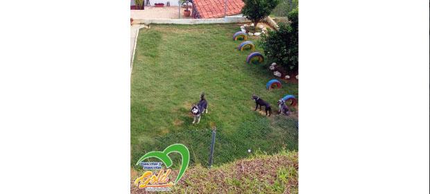 Clínica Veterinaria Mascotas Gold S.A.S. - Imagen 2 - Visitanos!