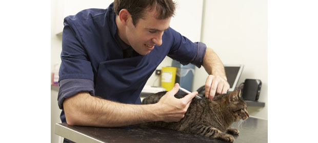 Veterinaria Catdog