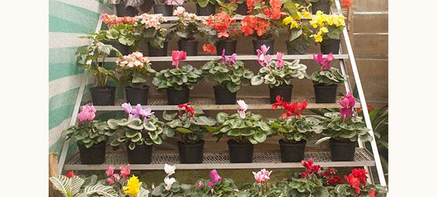 Plantas Ornamentales en LatinoAmerica - Páginas Amarillas.